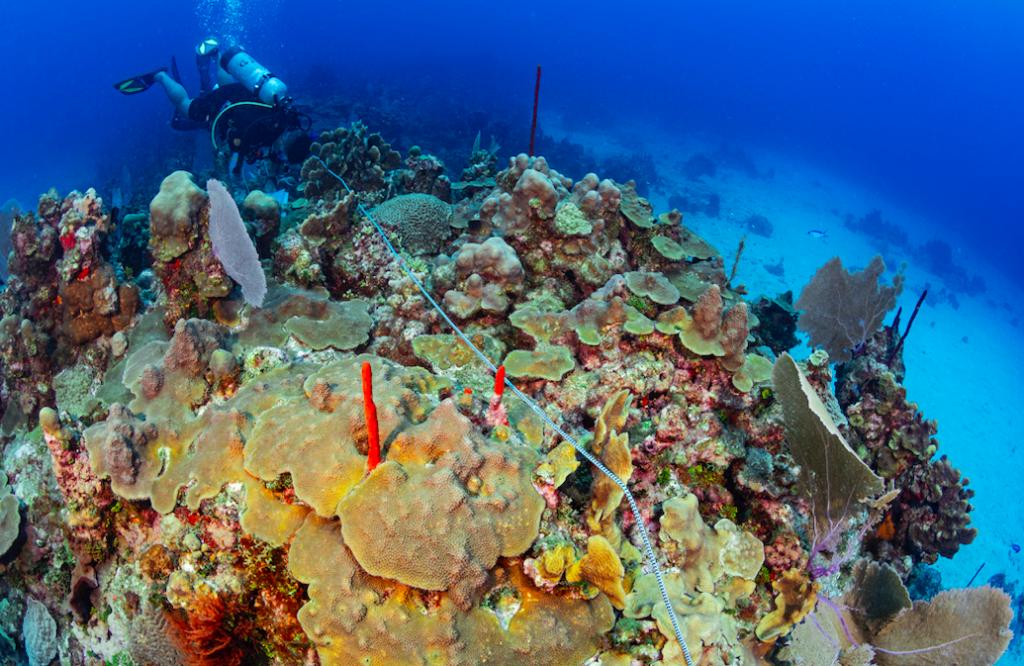 Detectives de coral: los Doctores Ruben Torres y Robert Steneck junto a un equipo de estudiantes evaluan la salud de los arrecifes en República Dominicana