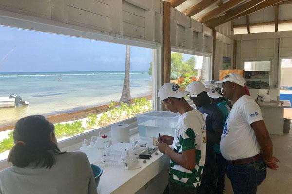 Agricultura sostenible y restauración de corales