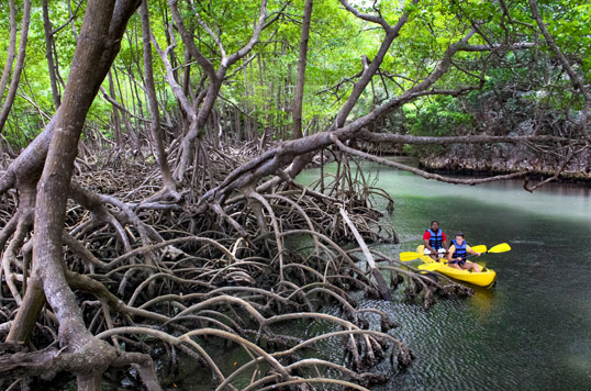 Descubre la diversidad de ecosistemas de Samaná